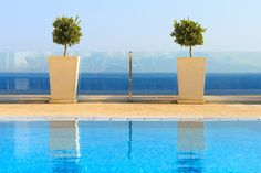 Two potted trees on the deck of a luxury swimming pool