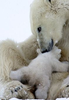 Pin by anita murphy on mommies and babies белые медведи, дик Nature Animals, Animals And Pets, Wild Animals, Strange Animals, Beautiful Creatures, Animals Beautiful, Regard Animal, Tier Fotos, Cute Baby Animals