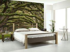 Oak Tree Forest Wall Mural