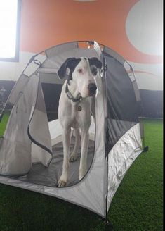 71a6db2cd40d xxlarge-soft-sided-dog-crate -the first dog tent/soft. Mighty Mite Dog Gear