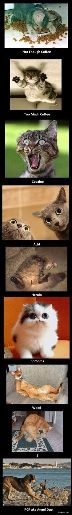 Cats on drugs.