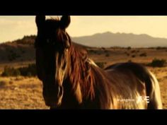 The last scene of Longmire S02E08, my eyes started leaking, man. Fight For Them, The Great Spirit Said