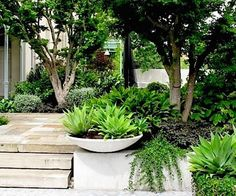 From dynamic designers recalibrating beloved traditions to enterprising plantsmen shaking up a landscape near you, these are the exceptionally talented people raising the bar in Australian garden design today. Tropical Landscaping, Tropical Garden, Backyard Landscaping, Australian Garden Design, Australian Native Garden, Back Gardens, Outdoor Gardens, Indoor Outdoor, Outdoor Pots