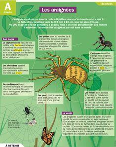Fiche exposés : les araignées