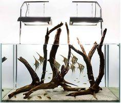 Aquarium Design Group http://www.americanaquariumproducts.com/