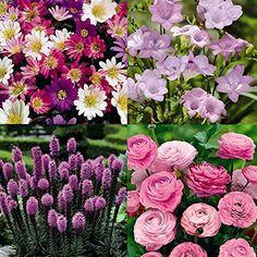 The Serenity Garden - 100 flower bulbs BulbsDirect http://www.amazon.com/dp/B00EVSTOM2/ref=cm_sw_r_pi_dp_X2Hdvb0ZRBAJW