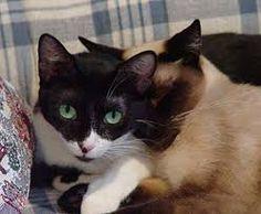 cat picture এর ছবি ফলাফল