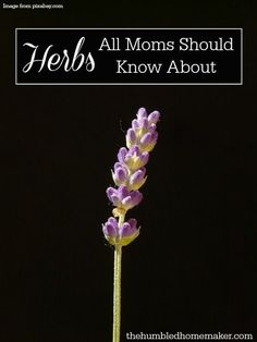 I didn't realize that herbs were so powerful for health and healing! All moms should know about these herbs! Herbs are a fantastic, natural alternative for moms looking to soothe their children… Why? Let me tell you!