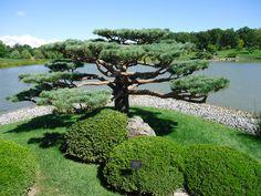 Japanese Garden at Chicago Botanic Gardens