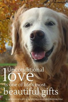 Unconditional love is one of lifes most beautiful gifts  -photo credit to the owner #dogs #cats
