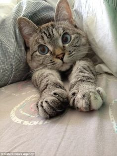 Relaxing: With more than one million followers on Instagram, the doe-eyed moggy is thought to be the most famous feline on the internet