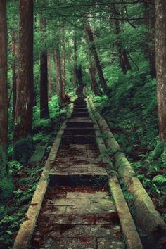 Straight Path by Hanson Mao - Taiwan - edited Magical Forest, Beautiful Forest, Beautiful Places, Peaceful Places, Simply Beautiful, Path To Heaven, Forest Path, Walk In The Woods, Natural Garden