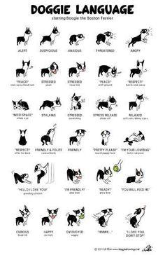 Dogs Body Language Photo Mug Gourmet Tea Gift Basket