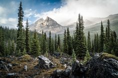 Mystic Mountain Forest Photo by Jason Hatfield — National Geographic Your Shot