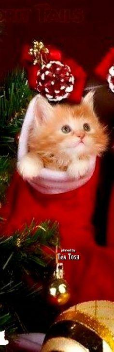 K = kittens Christmas Kitten, Christmas Animals, Christmas Love, A Christmas Story, Christmas Colors, Christmas Blessings, Christmas Wishes, Christmas Traditions, Santa's Little Helper