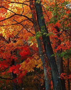 Autumn Medley | Flickr - Photo Sharing!