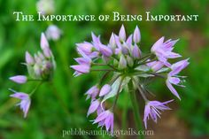 Pebbles & Piggytails: The Importance of Being Important
