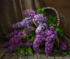 Purplishious Lilacs
