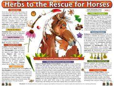 Horse Identification Chart   Woofs & Hoofs Animal Massage Webshop - Equine Herb Chart