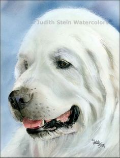 GREAT PYRENEES Dog 15x11 Giclee Watercolor Print by k9stein, $40.00