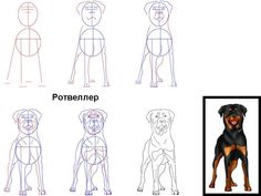 9 - 10 лет / Уроки рисования / Как нарисовать собаку (17 пород) :: Все о детях