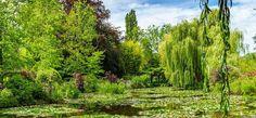 Dísznövények – Fa cserje fenyő évelő fajták szobanövények