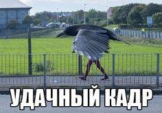"""УДАЧНЫЙ КАДР http://pyhtaru.blogspot.com/2017/02/blog-post_88.html Читайте еще: ============================== ПОДАРОК НА 14 ФЕВРАЛЯ http://pyhtaru.blogspot.ru/2017/02/14.html ============================== #самое_забавное_и_смешное, #это_интересно, #это_смешно, #юмор, #кадр, #голубь, #человек Хотите подписаться на нашу газете? Сделать это очень просто! Добавьте свой e-mail и нажмите кнопку """"ПОДПИСАТЬСЯ"""" Далее, найдите в почте письмо и перейдите по ссылке, подтвердив подписку Deliv"""