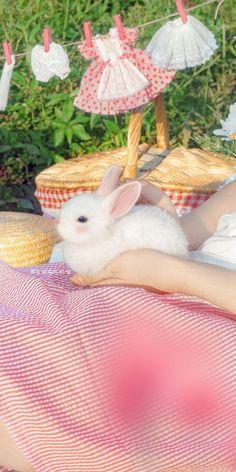 Rare Animals, Cute Cartoon Wallpapers, Screen Wallpaper, Inktober, Scenery, Bunny, Kawaii, In This Moment, Pets