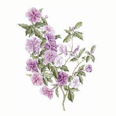 ilustração de flor manacá - Pesquisa Google