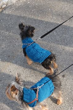 Ravelry: Single Cable Small Dog Sweater pattern by Autumn Bates