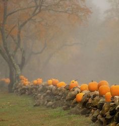 Pumpkins and eerie fog.