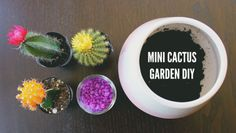 Mini cactus garden DIY // my tiny adventures - Modern Mini Cactus Garden, Tiny Cactus, Acai Bowl, Succulents, Diy, Crafts, Terrarium, Garden Ideas, Gardening