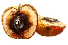 Photo about Rotten apple halves on white background. Image of rotten, rotting, waste - 33138715 Fruit Photography, A Level Art, Natural Forms, Food Waste, Sweet, Ethnic Recipes, Phyllis Schlafly, Decay Art
