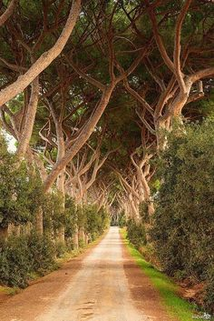 Livorno, Tuscany, Italy - Beautiful path through the trees  #visitingitaly