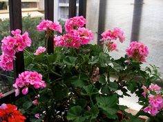 Good To Know, Outdoor Gardens, Home And Garden, Backyard, Flowers, Plants, Diy, Decor, House