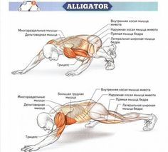 Alligator Sixpack Exercises - Healthy Ab Fitness Training Tips