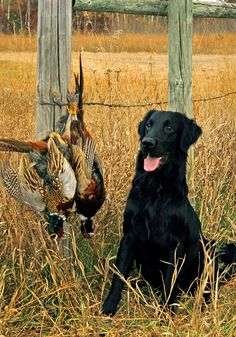 we need to teach jack how to retrieve ducks