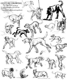 Hey! There's a very large (but work safe) sheet of dog gesture drawings done in a dog park. Also included  is a rant on why gesture drawing is important. ;] Gesture Drawing: I touched on the importance of gesture drawing in the last sketching tutorial I posted. A quick recap: The most…
