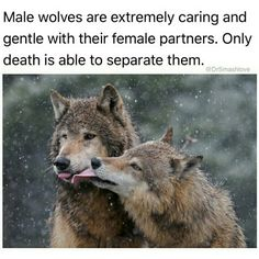 I've always been drawn to wolves