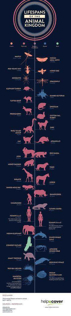 Levensduur van het dierenrijk in kaart gebracht