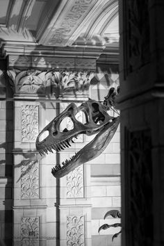 A Trip to The Natural History Museum — NICHOLAS POWELL