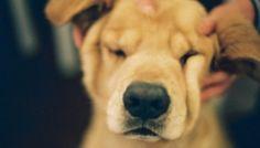El masaje canino: una técnica con muchos beneficios