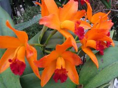 Some of the Most Beautiful Orchids in the World | Orchid Flowers Growing and Care Tips