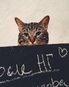 My cat 2016