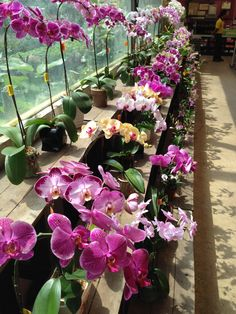 The orchid section at a local nursery #plants #gardening