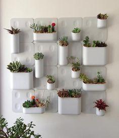 Indoor Gardens in a small area. - Small Garden Ideas