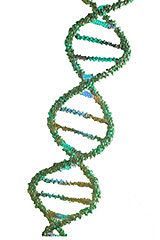 Scientists Discover that DNA Damage Occurs as Part of Normal Brain Activity