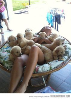 I want to take a nap every day under a pile of puppies.