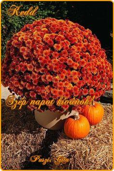"""Nyíló piros rózsa ,""""a nap süssön le rád.....,Szép őszi napokat ,Jó reggelt , szép napot ,Jó reggel kávéval ,Kellmes, szép napot ,Szép napot ,Kellemes hétvégét,Szép napos időt ,Szép keddi napot - Gita, - lovaszmarika Blogja - humor,képek,köszöntés,receptek,Szép írások,versek,viccek,video,"""