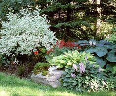 Bold Woodland Garden Plan: Black Mondo Grass, Hostas, Astilbe, Impatiens, Martagon Lily, Ostrich Fern ,Variegated Redtwig Dogwood.